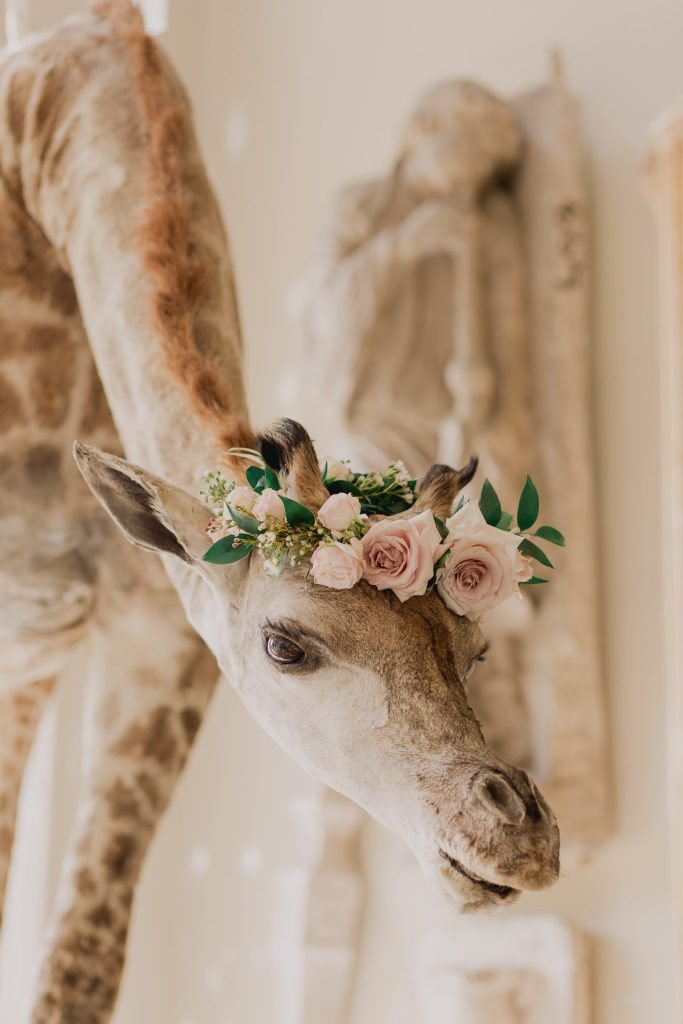 Aynhoe Park id filled with amazing art including this taxidermy giraffe which has a floral crown on its head